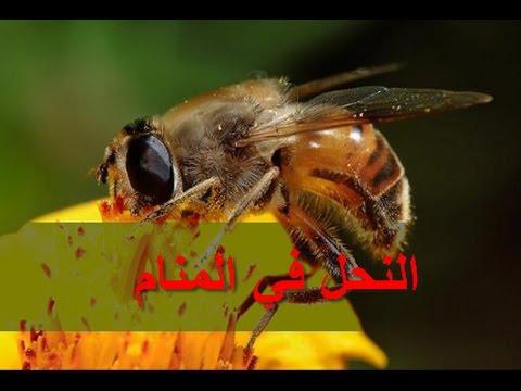 صور معنى النحل في الحلم , ماذا يحدث لو حلم شخص بالنحل