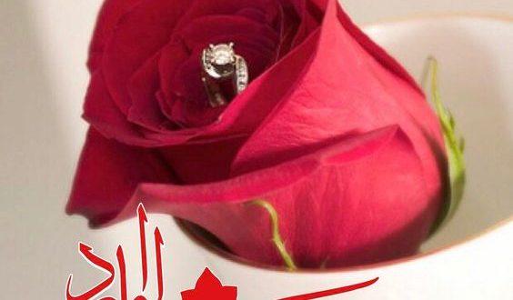 صورة اجمل وردة مساء الخير , وااااو ورود رااائعه وجذابه بالصور