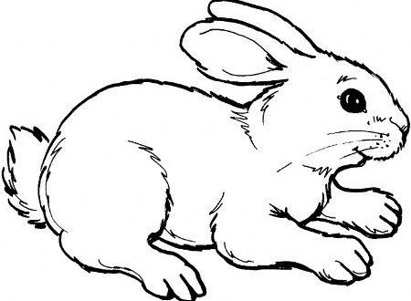 صور صور ارنب للتلوين , ارانب جميله لتعليم التلوين