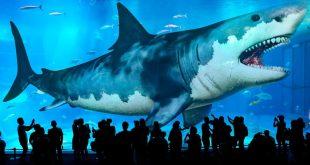 صور اكبر قرش في العالم , معلومات عن قرش البحر
