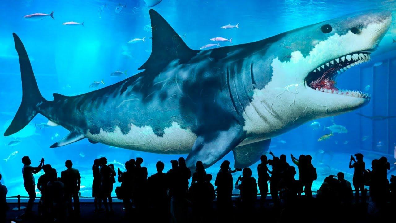 صورة اكبر قرش في العالم , معلومات عن قرش البحر