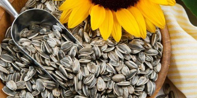 صور حب عباد الشمس , فوائد اكل حبوب دوار الشمس