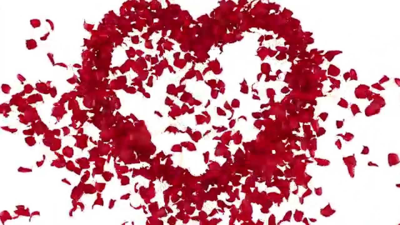 صورة صور ورد قلب , هديه رومانسيه روووعه لحبيبك 3485 8