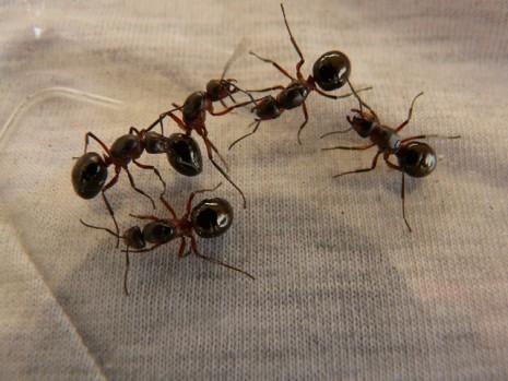 صورة تفسير رؤية النمل في المنام على الفراش , قول المفسرين عن الحلم بالنمل