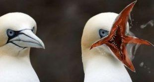 صور اغرب طيور في العالم , معلومات عن الطيور الغريبة