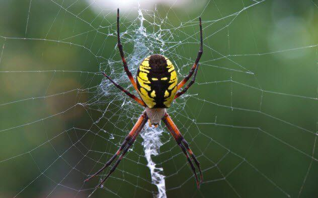 صورة تفسير حلم العنكبوت للحامل , معني رؤية العناكب في المنام