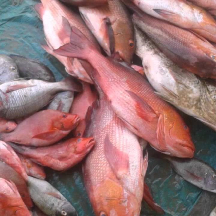 صورة اسماك البحر الاحمر للاكل , انواع السمك المغذية للجسم