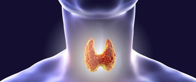 صورة اكلات مفيدة للغدة الدرقية , اطعمة تفيد للغدد الصماء
