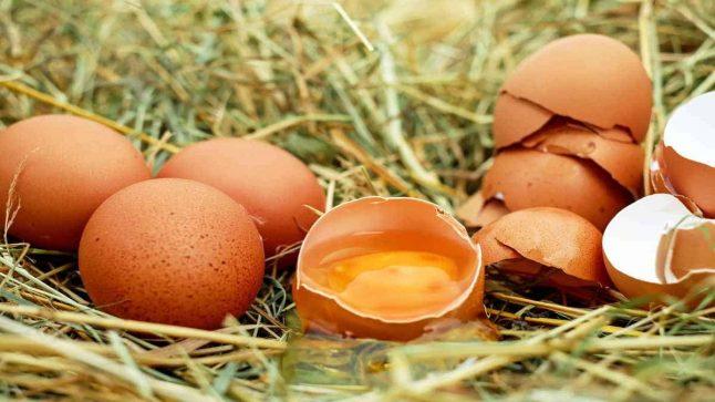 صورة تفسير حلم رؤية البيض في المنام , تناول البيض بالمنام