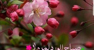 صور صباح الورد والكادي , اجمل الرسائل الصباحيه
