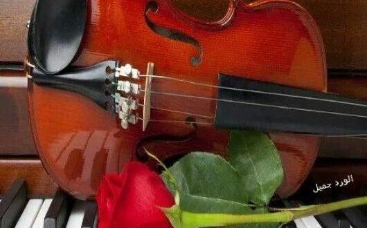 صورة بانوراما الورود عزف على همس الورود , هو الروح والالوان الجميله