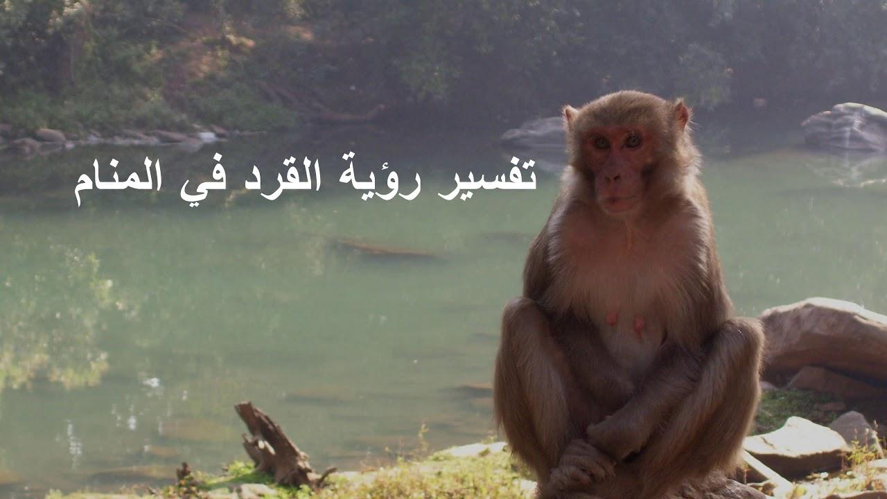 صورة القرد في المنام , لم تتخيل معناه