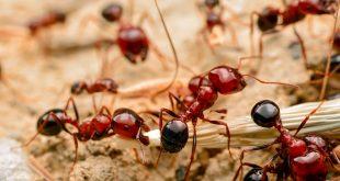 صورة تفسير حلم النمل الاحمر , من الاحلام المخيفة