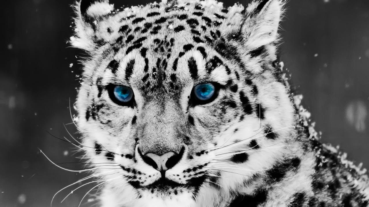 صورة صور حيوانات متوحشة , نخاف منها جدا