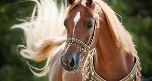 صورة اجمل الصور خيول , اروع خلفيات شبابية