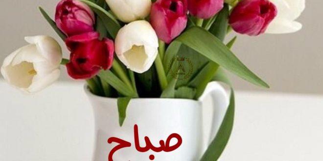 صورة صور زهور صباح الخير , صبح على حبايبك بوردة حلوة