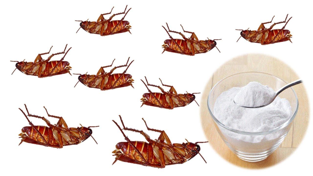 صورة للتخلص من الصراصير في المنزل للابد , اقضي على الصراصير بوصفة سحرية