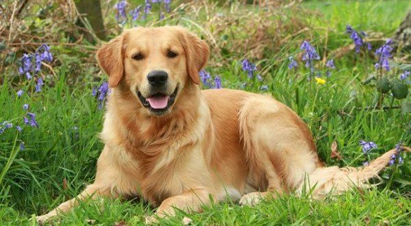 صورة انواع الكلاب بالصور , جميع انواع الكلام المختلفه مذهله