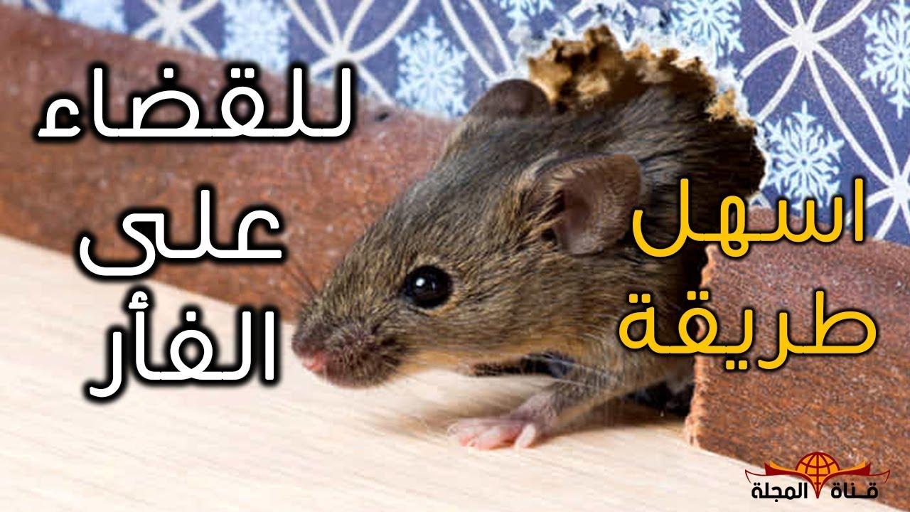 صورة طريقة طرد الفئران من المنزل , اخطر انواع القوارض وطرق التخلص منها