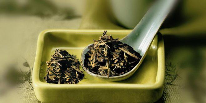 صورة الشاى الاخضر للتخسيس , الشاي الاخضر ومفعوله السحري لفقدان الوزن والحصول علي جسم مثالي