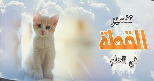 صورة رؤية قطط في المنام , تفسير الحلم بالحيوانات الاليفة