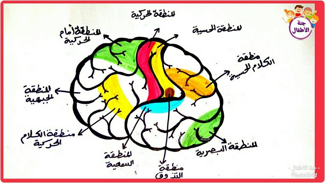صورة رسم المخ للاطفال , هو من اصعب شئ