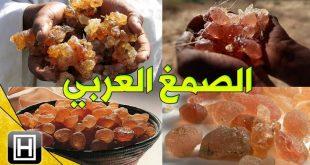 صورة ما هو الصمغ العربي , لا نعرفه لكنه يستخدم كثيرا