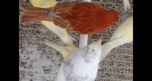 صورة افضل فيتامين للطيور , يحتاج بعض الاشخاص