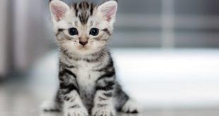 صورة تفسير حلم عن القطط , رايت قطة في الحلم