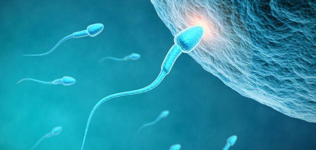 صورة ماهي الاشياء التي تساعد على الحمل بسرعة, نصائح مهمة اذا كنت تريدن ان تنجبي