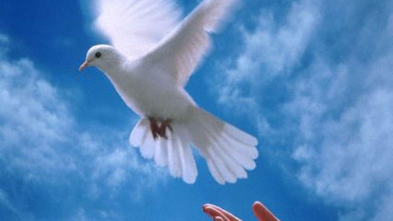 صورة موضوع تعبير عن السلام بالعناصر، هو سلام المجتمع 3880 3