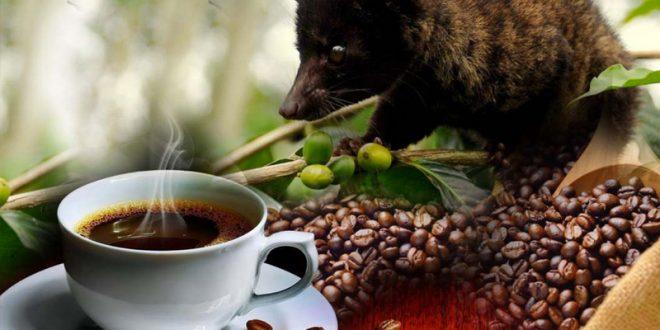 صورة اغلى قهوة في العالم , تعرفى على اغلى انواع القهوة