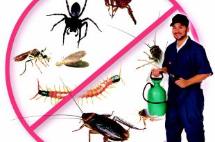 صورة شركة مكافحة الحشرات بالمدينة المنورة , افضل شركة للحشرات بالمدينة المنورة