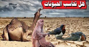 صورة هل تحاسب الحيوانات يوم القيامة، يأتي في بال الجميع